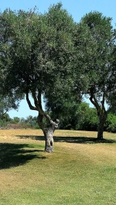 Golfer Tree